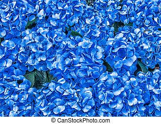 Hydrangea Flowers Background