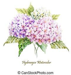 hydrangea, ramo
