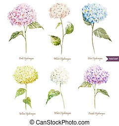 Beautiful watercolor vector hydrangea set different colors