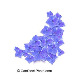 Hydrangea vector illustration. Blue summer flower isolated on a