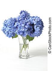 Hydrangeas in vase - Mophead hydrangeas in a glass vase....