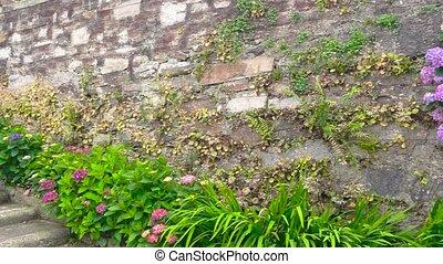 Hydrangeas on the wall.