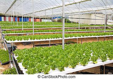 Hydroponic green house - Organic hydroponic vegetable garden...