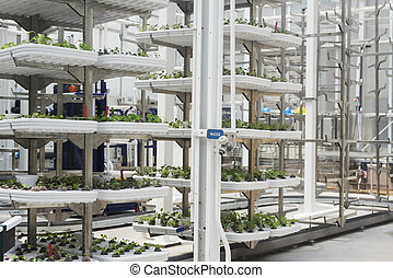 Hydroponic Greenhouse in Florida.