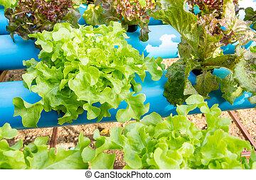 hydroponic, növényi, alatt, tanya
