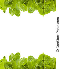 Hydroponic plant with white isolated background and work...
