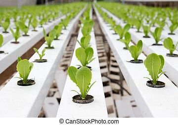Hydroponic vegetable plantation - Organic hydroponic...