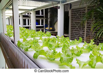 Hydroponic vegetable plantation system