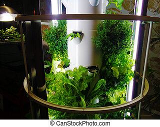 Hydroponic vegetables indoors background vivid template