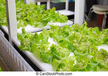 hydroponic, vegetal, en, granja