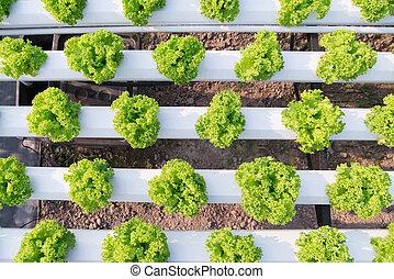 hydroponic, vehículo de la ensalada, granja