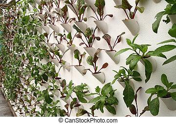 hydroponics, legumes
