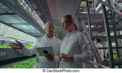 Hydroponics method of growing salad in greenhouse. Four lab...