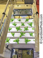 Hydroponics Modern Indoor Plants Garden Farming