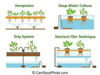 Set of aeroponic and hydroponic plant growth systems. Color vector illustration