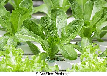 Organic hydroponic vegetable growth cultivation farm background.