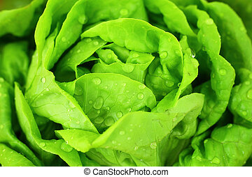 Hydroponics Vegetable ,the nutrition in the future