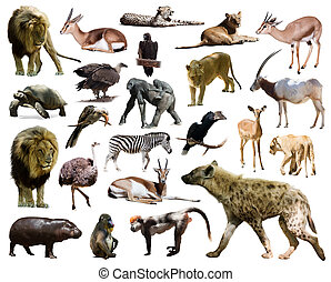 hyena and other African animals. Isolated on white