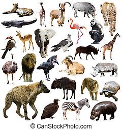hyena and other African animals