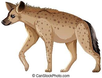 Hyena animal on white background