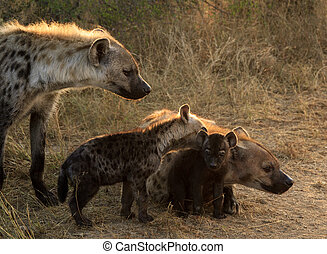 Hyena family with cubs