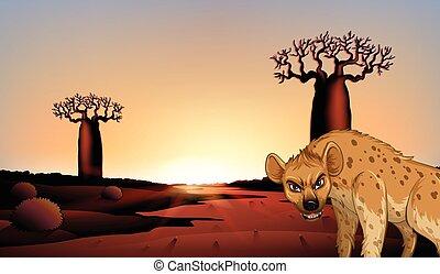 Hyena in the field
