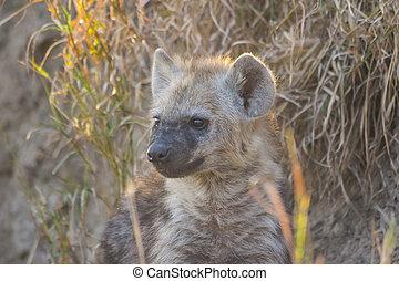 Hyena pup at a den 1