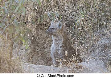 Hyena pup at a den 2