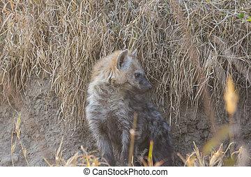 Hyena pup at a den 3