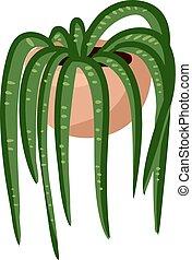 Hygge potted succulent plant. Cozy lagom scandinavian style plant image