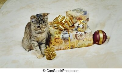 I am waiting for Christmas. A kitten sits near boxes with...