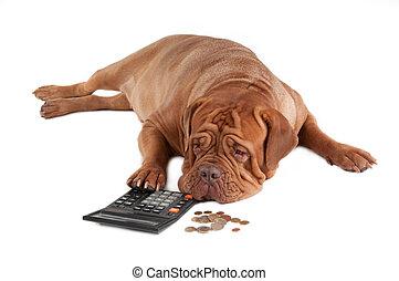 I do not have enough money - Tired dogue de bordeaux...