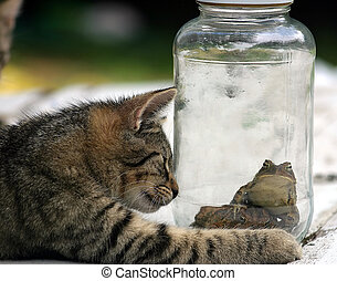 A cat looking at a couple toads in a jar.