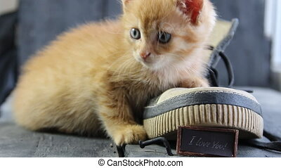 I Love You text and kitten - Cute little ginger kitten and...