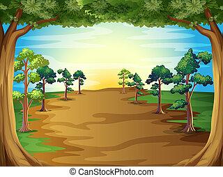i tiltagende, træer, hos, den, skov