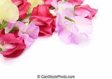 I took a sweet pea in a white background.