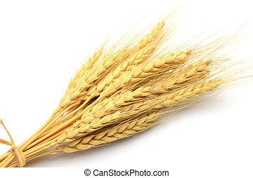 wheat ear - I took a wheat ear in a white background.