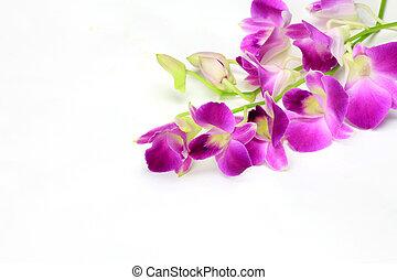 I took dendrobium phalaenopsis in a white background.