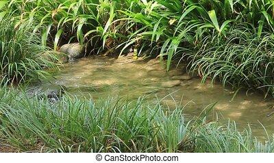 clear stream