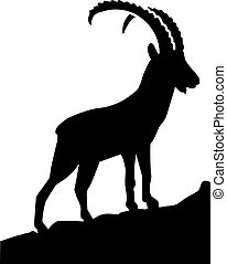 Ibex in the mountains