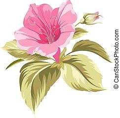 ibišek, obrazný, flower.
