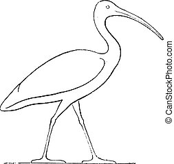 Ibis coronation, Egyptian sculpture, vintage engraving. -...
