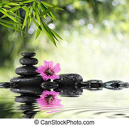 ibisco, bambù, nero, pietra