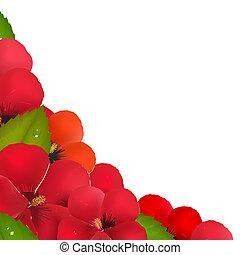 ibisco, bordo, fiori, foglia, rosso
