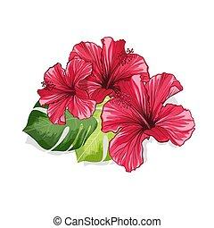 ibisco, hawaiano, monstera, fragranza, fiori, rosso