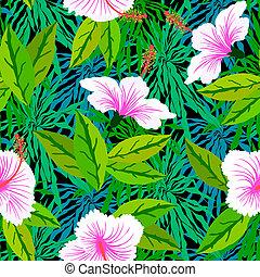 ibisco, modello, fiori bianchi, tropicale