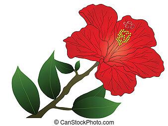 Ibisco rosso ibisco germogli fiore rosso ramo for Ibisco rosso