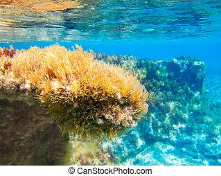 ibiza, подводный, formentera, ветреница, морской пейзаж