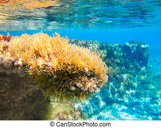 Ibiza Formentera underwater anemone seascape in golden and...