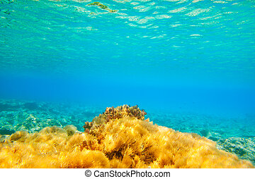 Ibiza Formentera underwater anemone seascape in golden and...